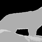 Silhouette eines Wolfs
